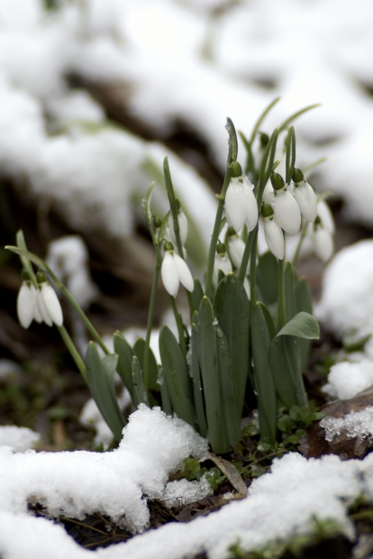 snowonflowers