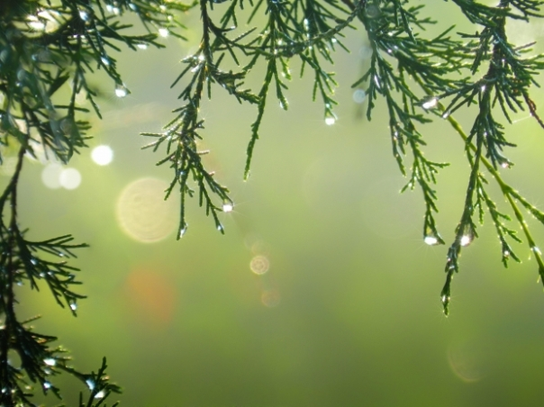 rainy branches