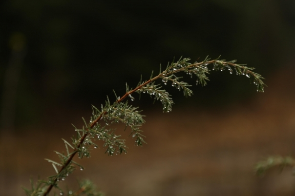 branch with water droplets