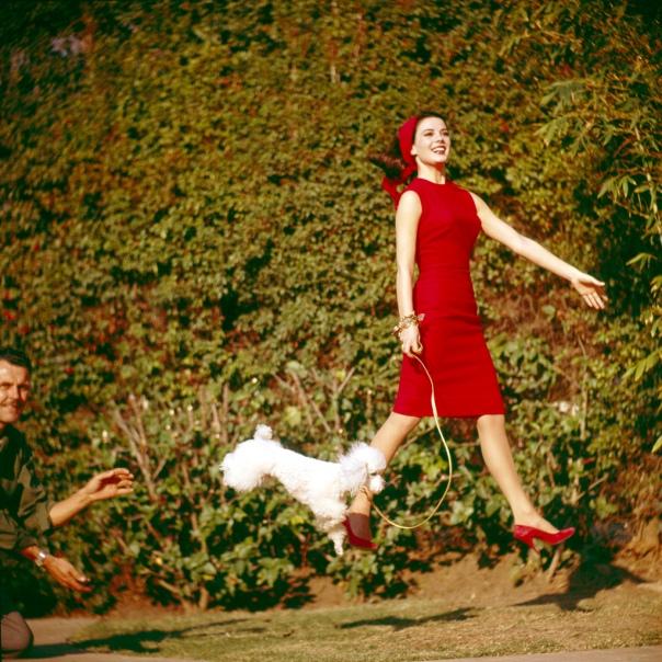 6434 (9003179) Natalie WOOD (re., *20.07.1938 - 29.11.1981), amerikanische Schauspielerin, mit einem Pudel springend, vermutlich während Dreharbeiten. Links ein Crewmitglied des Drehteams. Ort unbekannt, undatiert ca. Ende der 60er Jahre. [SPERRVERMERKE BEACHTEN | PLEASE CHECK RESTRICTIONS! Nutzung nur mit Genehmigung und gegen Honorar, Beleg, Namensnennung und zu unseren AGB. Nur zur redaktionellen Verwendung. Honorare an: KEYSTONE Pressedienst, HASPA, BLZ 20050550, Kto. 1235130877];, Außenaufnahme, color, 20. Jahrhundert, 1960er Jahre, Personen, Schauspielerin, brünett, Brünette, rot, rotes, Kleid, Sommerkleid, Schuhe, rote, Kopftuch, Pudel, Hund, weißer, springen, springend, springt, lacht, lachen, lachend, Dreharbeiten, Stagehand, Crew, Crewmitglied, Name= Wood, Natalie, a00669