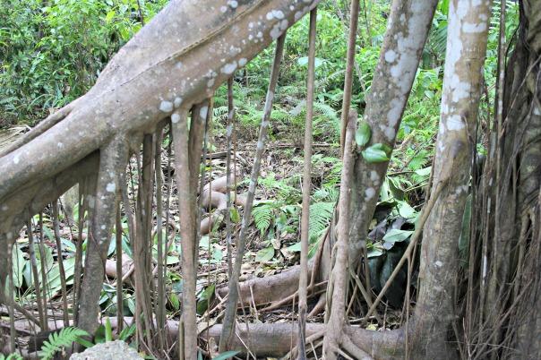 weird roots