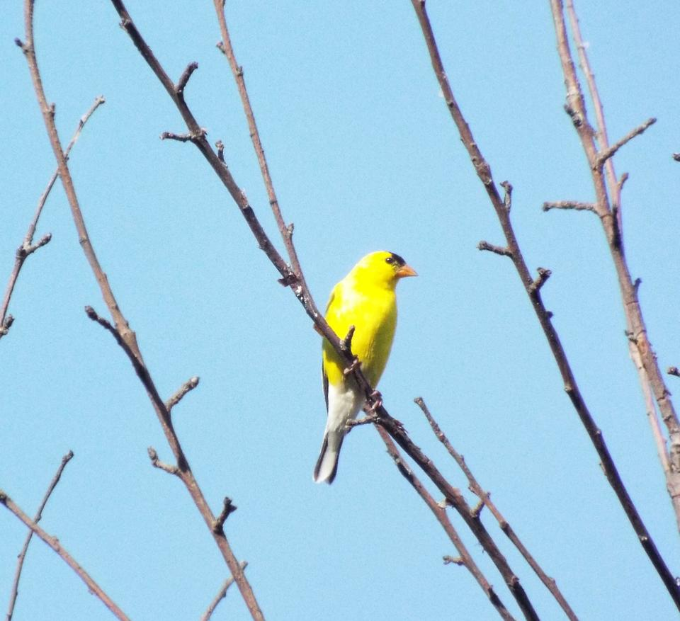 pop of color bird