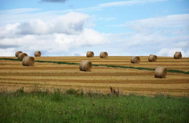 straw bales