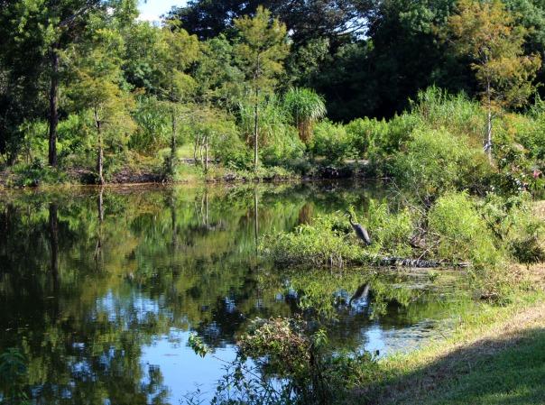 fiu-nature-preserve