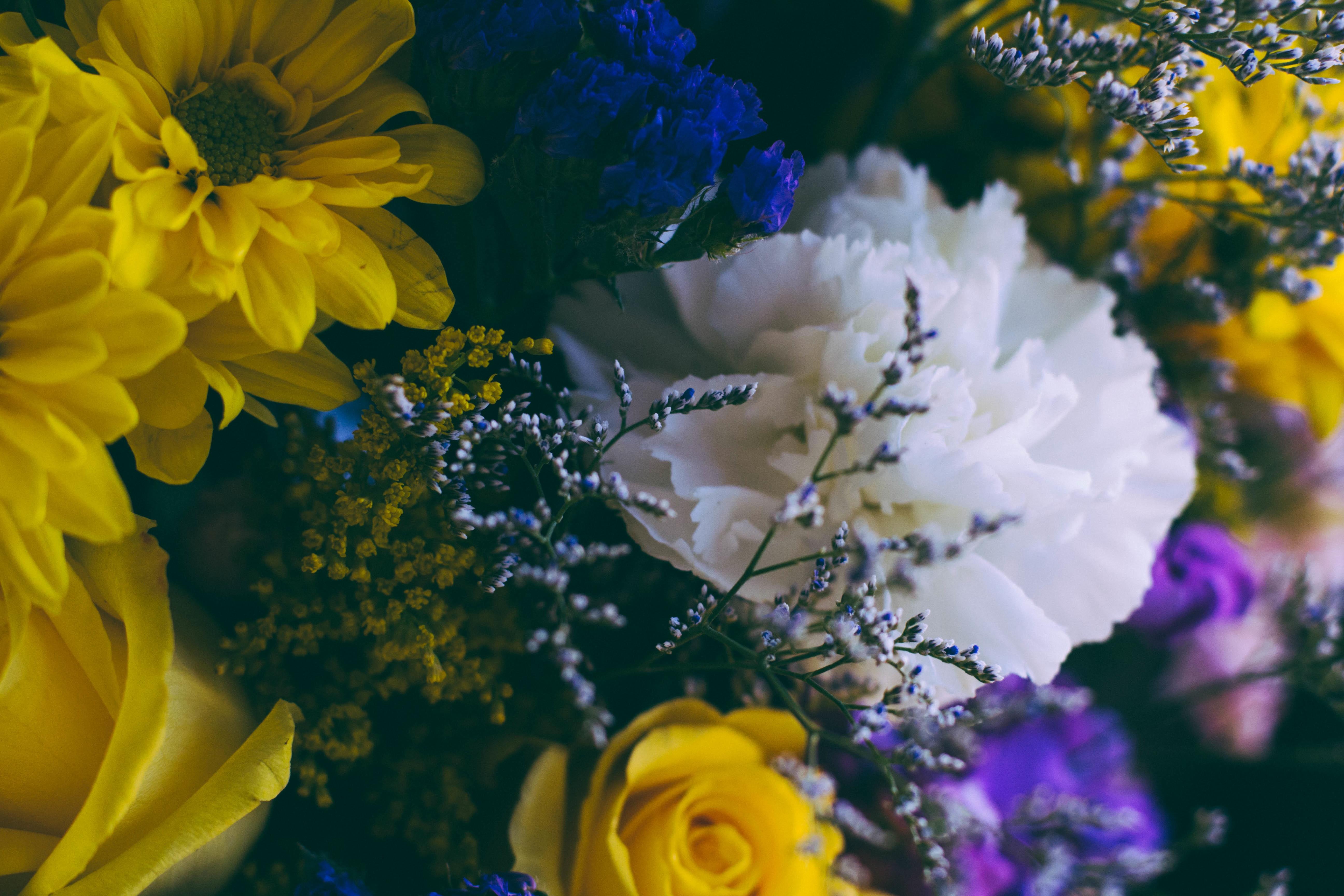 closeup on flowers